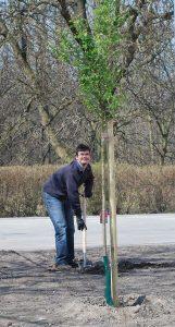 Mężczyzna wykopuje łopatą dołek w ziemi, w celu zasadzenia drzewka.
